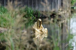 lower-austria-fish-pond-lake-guardians-of-time-by-manfred-kili-kielnhofer-contemporary-art-modern-sculpture-fine-photography-arts-ars-statue-7123
